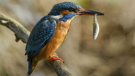 Wilder River, Lakes and Wetlands category winner, Anthony Hurren, also took the title of Kent''s Wil