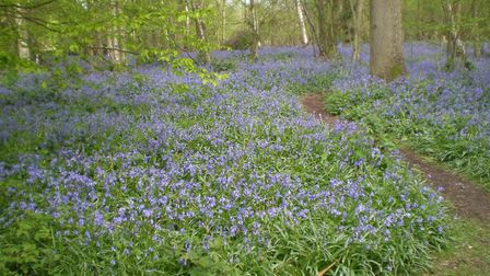 Kent is top in UK for health and wellbeing. Picture: The Hucking Estate nr Maidstone' (photo: Clive