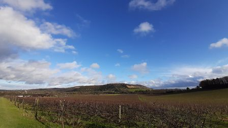 Denbies vines in winter with view to Box Hill with large blue sky by Chris Howard