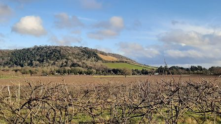 Winter view from Denbies to Box Hill - alternative closer up by Chris Howard