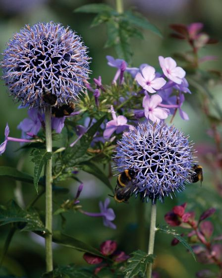 Echinops are a good choice with their clusters of flowers