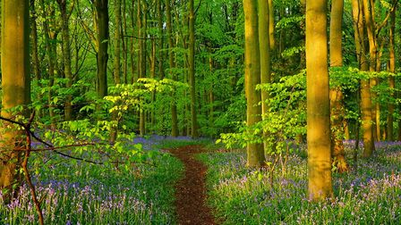 Standish Woods, Gloucestershire is one stop on our virtual bluebell tour of the Cotswolds (photo: Pe