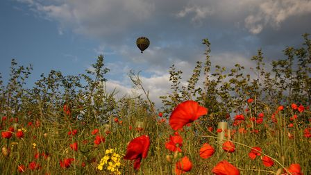 Balloon ride over Heartwood Forest (c) Graham Custance/Alamy Stock Photo