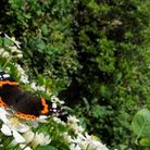 Bring nature back into your garden with help and advice from the Essex Wildlife Trust