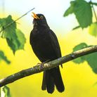 Have you ever heard such a glorious cacophony of sounds now birds are able to sing their little hear