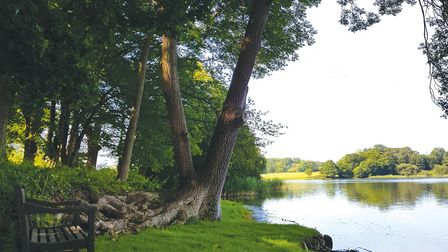 Combermere mere and wood currently closed to walkers and wedding parties Photo: Combermere Abbey