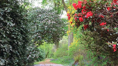 A 'walk of the week' directs visitors to the best colour (photo: Mandy Bradshaw)