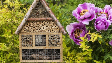 A bee hotel can help the tiny insects thrive in your garden. Photo: Getty Images/iStockphoto