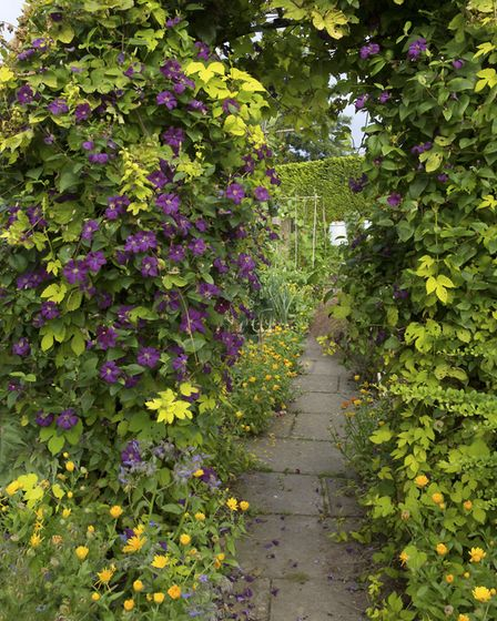 Clematis and hops adorn the archway into the potager