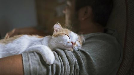 Stroking a cat has the power to calm us, easing anxiety and stress