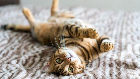 Cats can trigger calming chemicals in your body which lower stress and anxiety levels