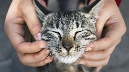 Research has shown cats purr at a frequency that can help heal bones and wounds