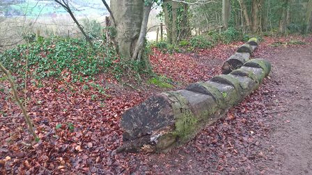 Seats in Frith Wood
