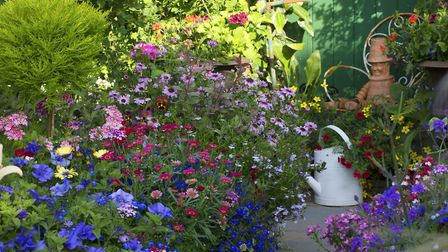 Colourful potted annuals at Driftwood