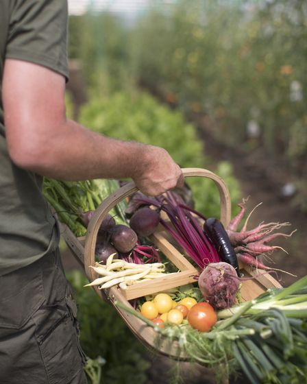 Produce from Heckfield Place's Market Garden