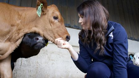 Country girl Rebecca had never milked a cow until lockdown Photo: Halton Farms
