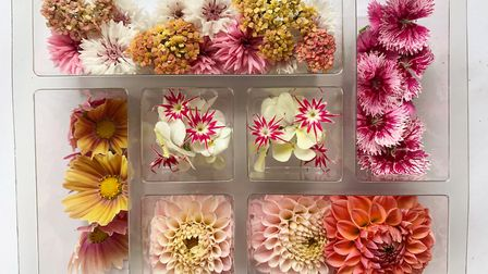 The edible flower selection in pinks, pesches and white Photo: Greens of Devon