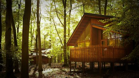 Blackwood Forest in Hampshire. Supplied by Blackwood Forest