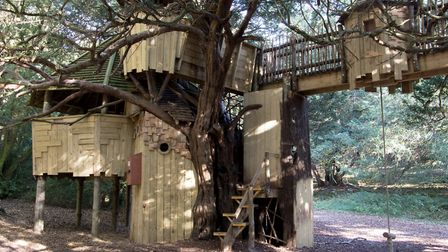 The Tree House in the woods