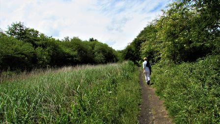 The path beside the overgrown Runcorn and Latchford Canal Photo: Paul Taylor