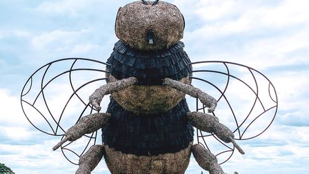 This year Snugburys Ice Cream Farm are supporting The Bumble Bee Conservation Trust Photo: Jenny Sch