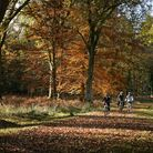 Cycling through the New Forest in autumn © VisitEngland