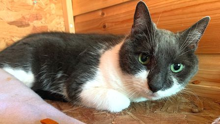 Sweet senior lady Lucy is looking for a new home. Photo: Sandbach Animal Rescue