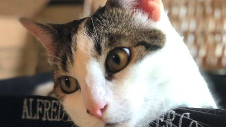 Toby is one of the lucky ones and loves his new home. Photo: Sandbach Animal Rescue