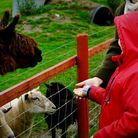 There are many farm animals to get to know at CAFT. Photo: Jamie Forrest.