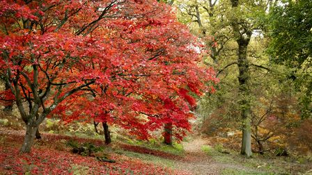 Winkworth's autumnal colours. Image: Andy Newbold