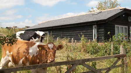 Bull Farm Studios – boutique self-contained accommodation beside a working dairy farm credit Sue Tin