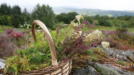 A basket of foraged items from Rhug Estate