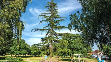 Theres quite an unusual-looking tree in one of the childrens play areas of St Johns Park. Its diffic