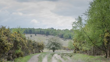 The Ashdown Forest is a glorious mix of heath and woodland (Photo by Deirdre Huston)