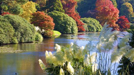 Pampas grass adds feathery focal points amongst the blaze of colour at Sheffield Park. Photo: Leigh