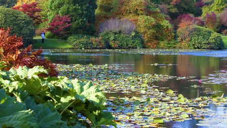 Sheffield Park's reflections. Photo: Leigh Clapp