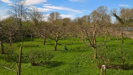 Orchard along the walk