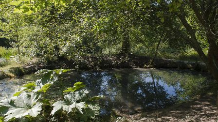 A pond at Chelwood Vachery. Photo: Deirdre Huston