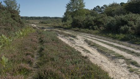 A heathland track, Ashdown Forest. Photo: Deirdre Huston