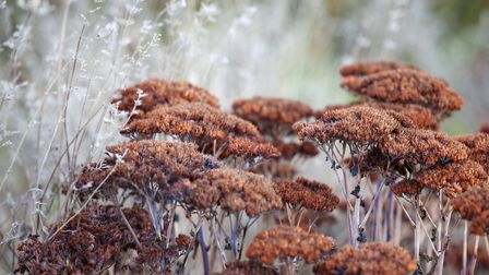 Leave seedheads for wildlife. Photo: Leigh Clapp