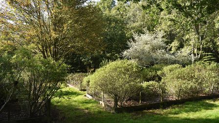 The hebes are one of four national collections in the arboretum Photo: Write Image for you Media