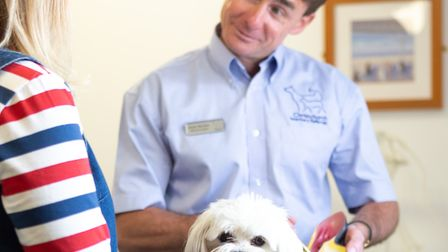 Shane Morrison, vet and founder of Christchurch Veterinary Referrals, explains that soft tissue prob