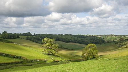 The view across the Titsey Estate and North Downs. Image: STELLA SCORDELLIS
