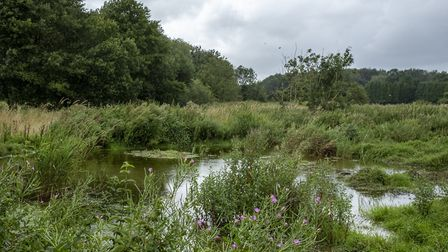 The current disused watercress beds will be transformed in to a lush wetlands habitat with luxury ce