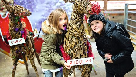 Christmas at the Farm: there's plenty of festive family fun to be found at Tatton Park Photo: KSP201