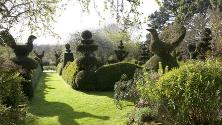 Stroll the avenue of topiary