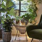 Indoor plant collection, from 5.99 to 175, dobbies.com