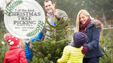 BEST PLACES TO BUY A CHRISTMAS TREE