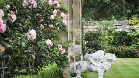 Roses in the beautiful gardens at Hever Castle (photo: Kotomi Yamamura)