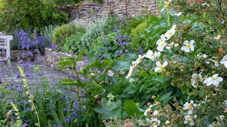 Paul has used planting in pastel shades to soften the Cotswold stone walls. Photo: Mandy Bradshaw